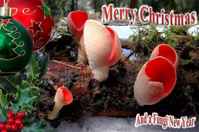 Elf Cup Christmas e-card.jpg